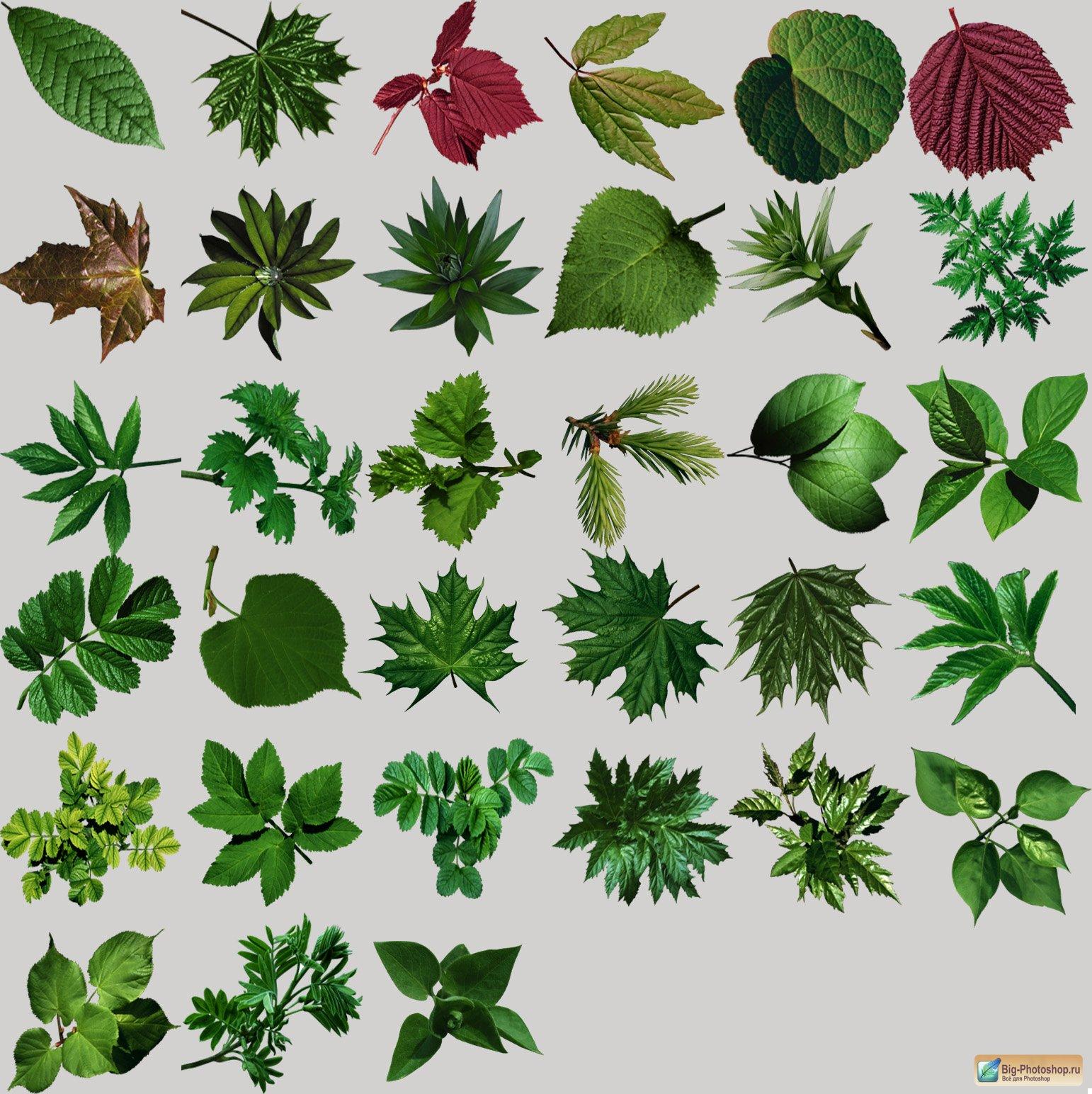 Скачать иконки - зеленые листочки разных деревьев: 33 шт.
