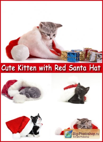 Cute Kitten with Red Santa Hat - Stock Photos