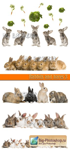 Rabbits and hares 3