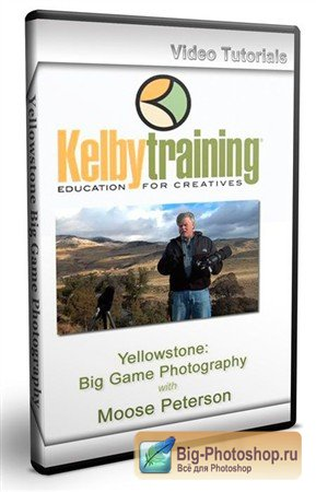 Kelby Training - Yellowstone Big Game Photography