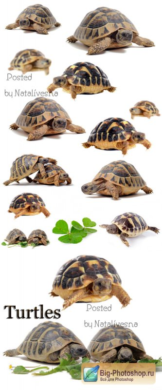 Черепахи / Turtles - Stock photo