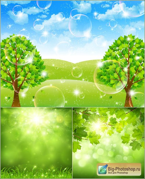 Maple leaves summer tree vector