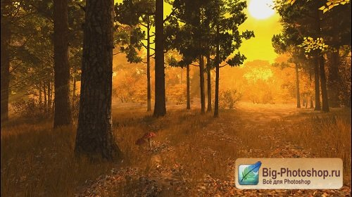 Autumn Forest Footage