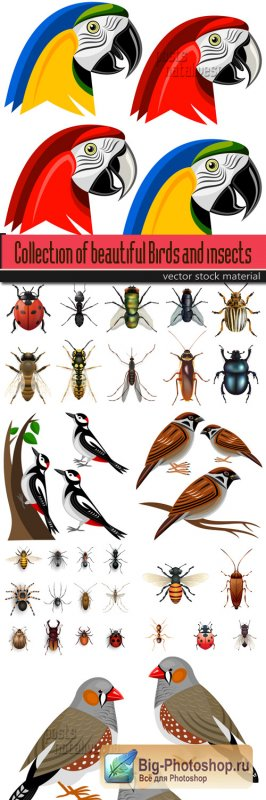 Collection of beautiful Birds and insects