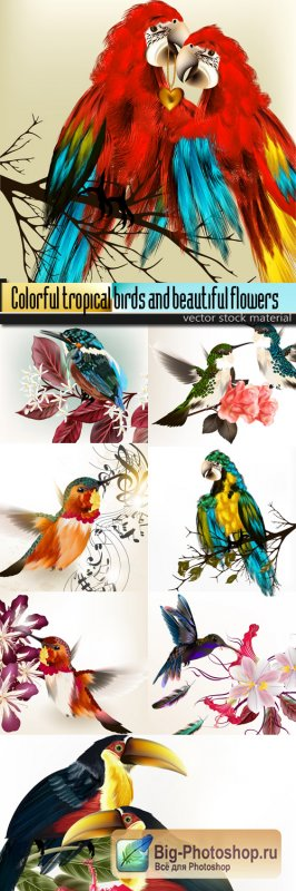 Colorful tropical birds and beautiful flowers