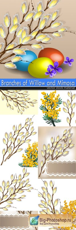 Branches of Willow and Mimosa