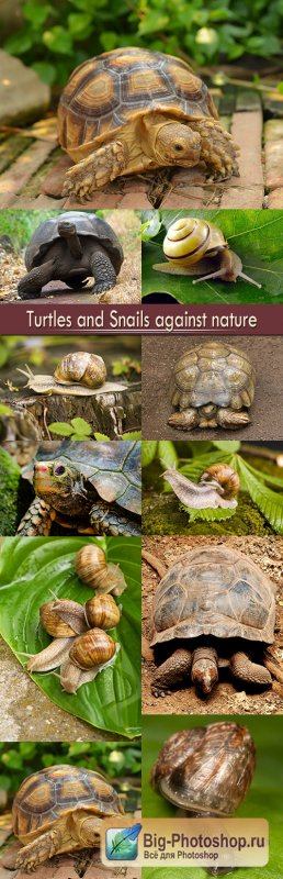 Turtles and Snails against nature