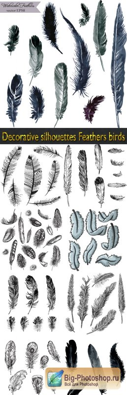 Decorative silhouettes Feathers birds