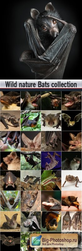 Wild nature Bats collection