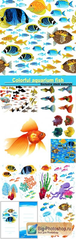 Beautiful colorful aquarium fish