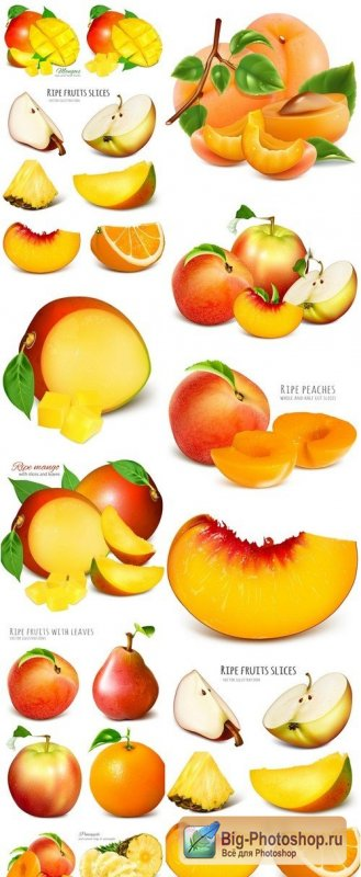Ripe fresh fruits mango and apricots #4 13X EPS