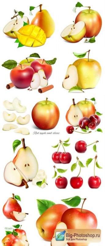 Fresh ripe garden fruits apple, pear #3 11X EPS