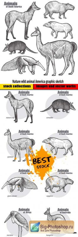 Nature wild animal America graphic sketch