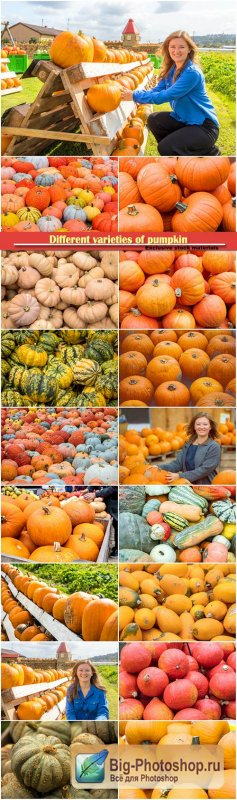 Different varieties of pumpkin