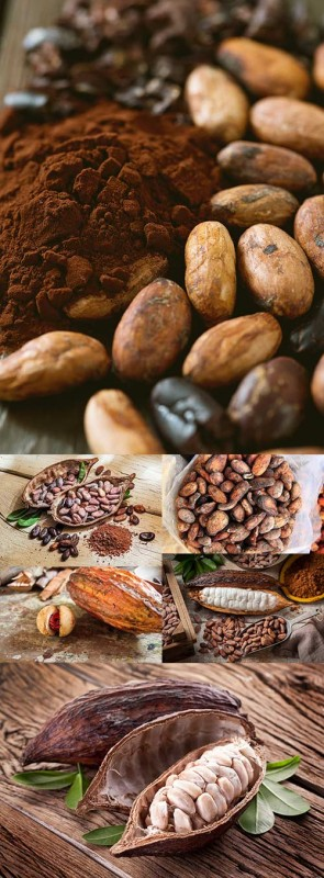 Natural brown cocoa beans and dried pod on wooden table