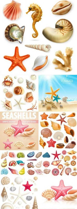 Sea cockleshells, exotic mollusks and starfish