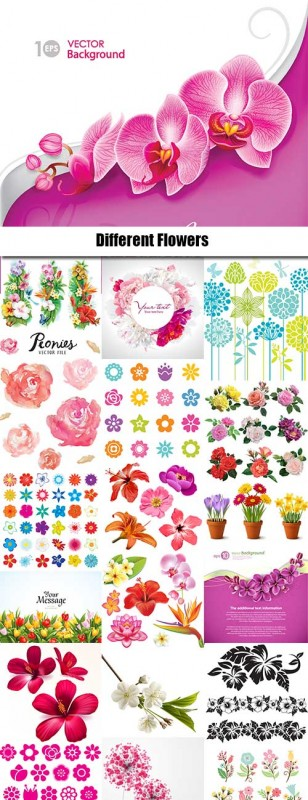 Different Flowers  in vector from stock - 25 Eps